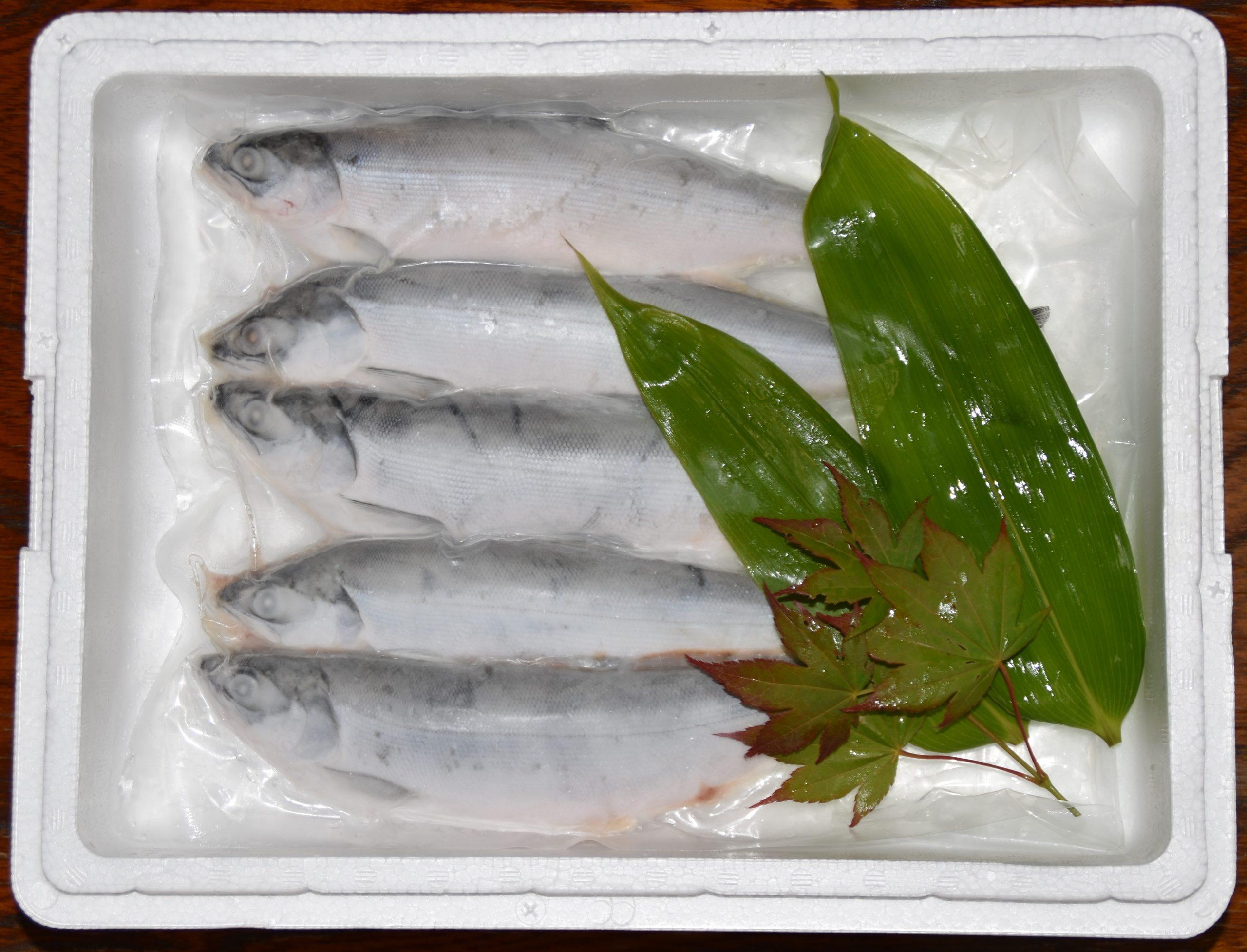 支笏湖チップ10匹冷凍